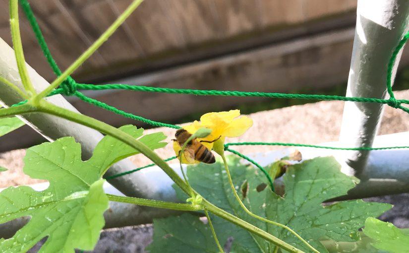 ミツバチがやってきた!